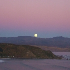 full-moon-eastbourne-nz