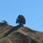 Wanganui NZ trip home - lone tree