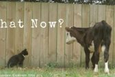 What-Now-blog